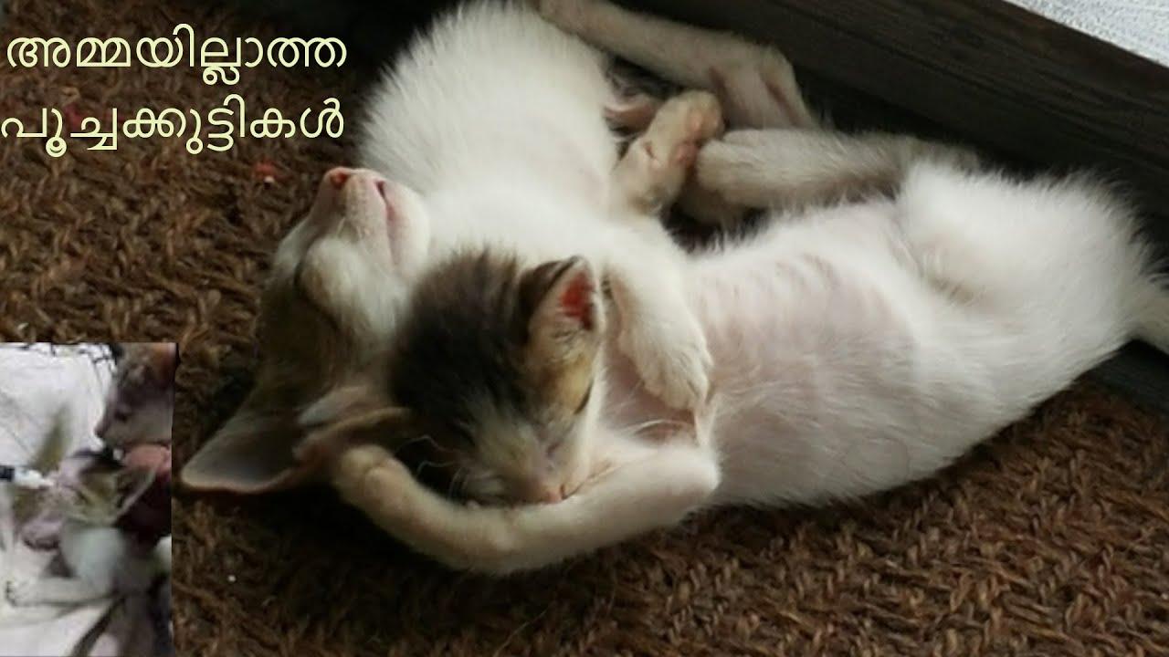 അമ്മയില്ലാത്ത ഈ പൂച്ചകുട്ടികള് പാല് കുടിക്കുന്നത് നോക്കൂ | You Will Love These Motherless Kittens