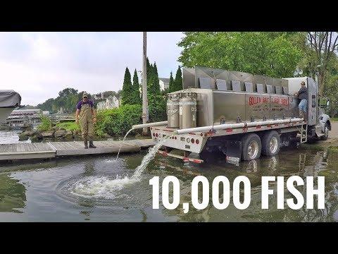 Lake Mendota Walleye Stocking 2018
