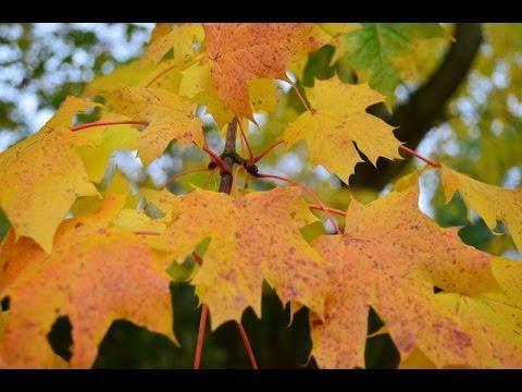 Nikon D5100 Picture Samples - Low light, Nature, Object, Landscape, etc