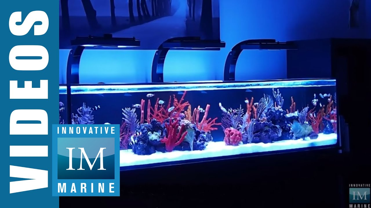 Aquarium Unterschrank 30 X 30 Innovative Marine Nuvo Sr Series 60 80 And 120 Gallon
