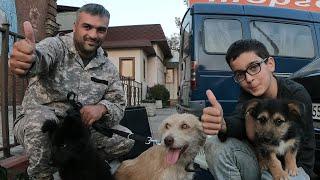 Дворняги из Осетии уехали в ГерманиюВстречай Германия и Новосибирск