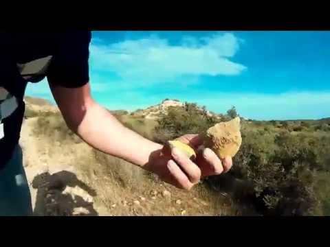 Ballena y tiburón fósil - Late Pliocene fossil whale and shark -Almería, Spain