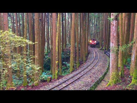 Alishan Forest Railway, cargo train (Feb.6.2018)