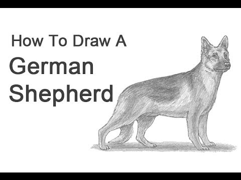 How to Draw a Dog (German Shepherd) - YouTube