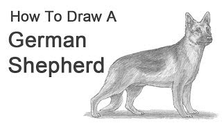 How to Draw a Dog (German Shepherd)