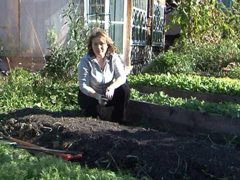 Закладка теплых грядок посадка лука и тюльпанов