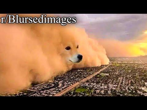R/Blursedimages | Goodbye, Gas Dog!