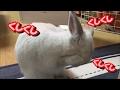 [うさぎ] 可愛い 子うさぎ くしくし (Rabbit)
