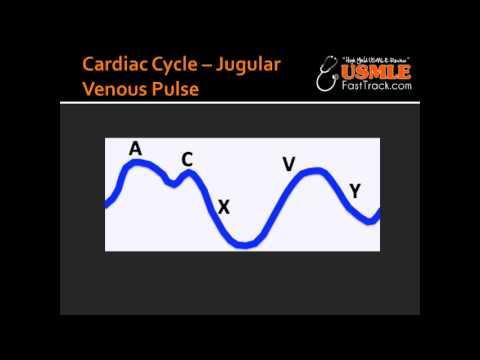Cardiac Cycle Jugular Venous Pulse
