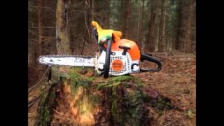 Těžba a přibližování dřeva 2016