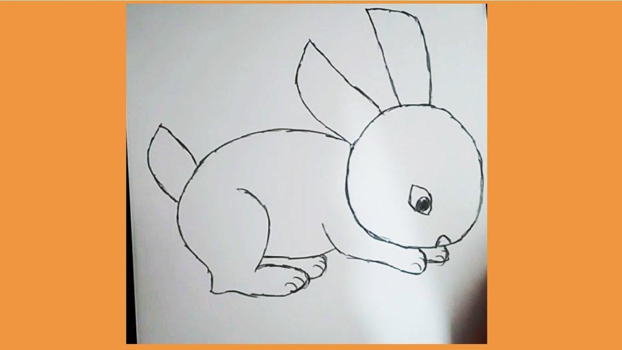 Sevimli Tavşan çizimi Kolay Hayvan çizimi Youtube