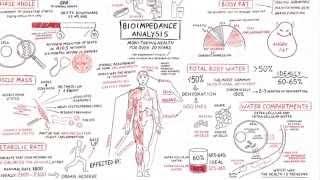 Bio Impedance. Analysis Explained - Men