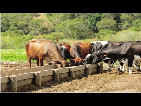 Produção de Leite a Pasto - Alimentos Concentrados