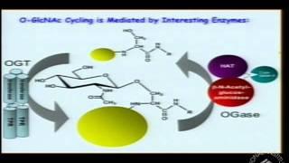 Bittersweet Roles of O-GlcNAcylation in Diabetes, Alzheimer