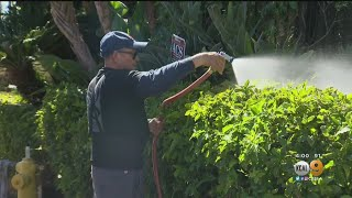 Wind And Fire Danger Looms Over Pacific Palisades