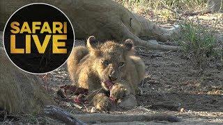 safariLIVE - Sunrise Safari - May, 25. 2018