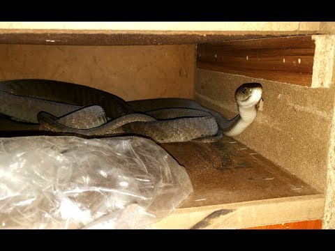 MAMBA PAIR IN BEDROOM CUPBOARD!