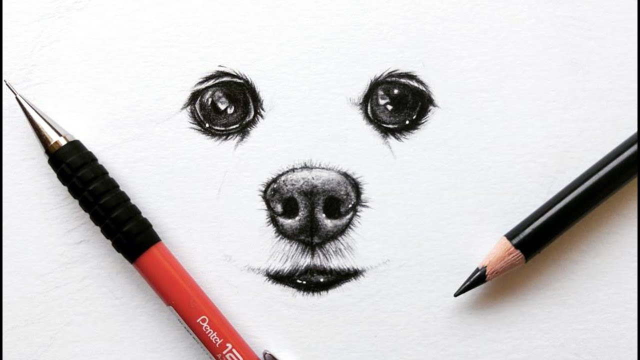 how to draw a pomeranian dog eyes and snout leontine van vliet
