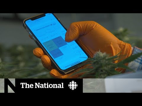 Weed and tech grow side-by-side amid flourishing cannabis industry