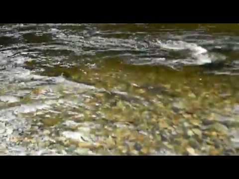Fish Of Kanaka Creek