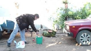 Арбузы в арбузной мякоти