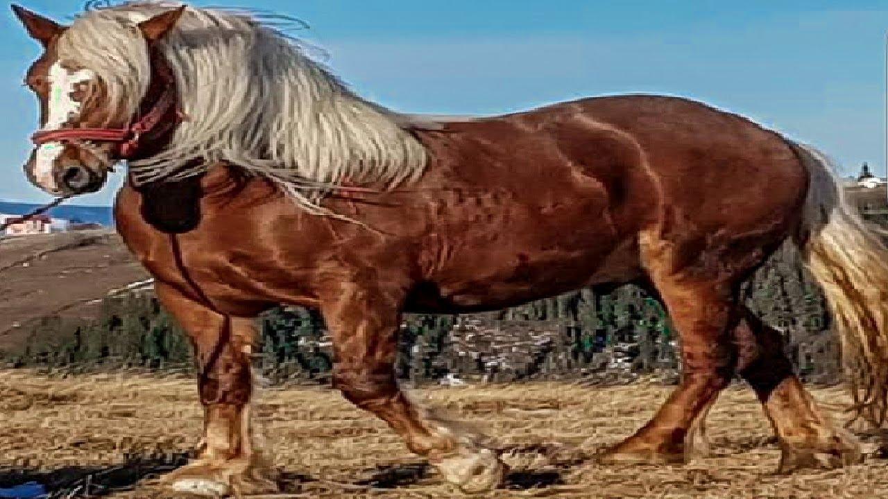 femeie care iube? te caii