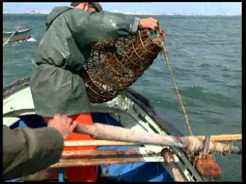 Cádiz y el Mar.  Artes de Pesca, Engaños