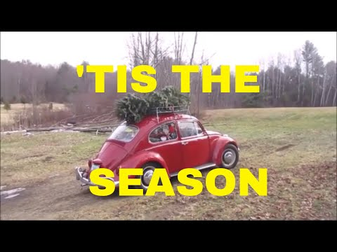 CHRISTMAS TREE HUNTING IN A 1967 VW BUG