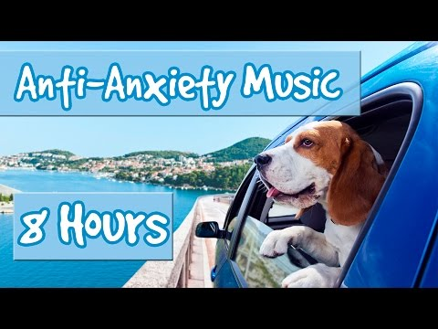 8 Hours of Music for Anxious Dogs – Music to help with Separation Anxiety and Nervous Dogs 🐶