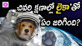 Laika Dog In Space Video Mystery in Telugu | About Space Facts | Dog Short Film in Telugu Mysteries