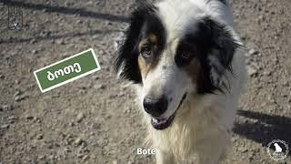 Dog Organization Georgia D.O.G