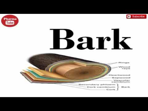 Bark - Pharmacognosy-1