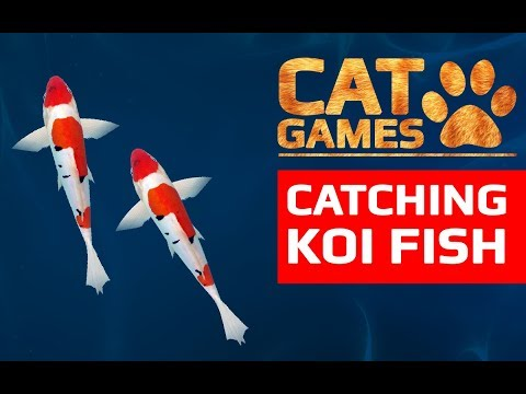 CAT GAMES - CATCHING KOI FISH (ENTERTAINMENT VIDEOS FOR CATS TO WATCH) 60FPS