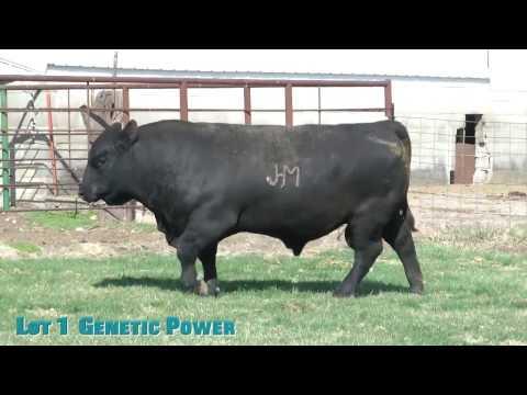 Lot 1  Genetic Power