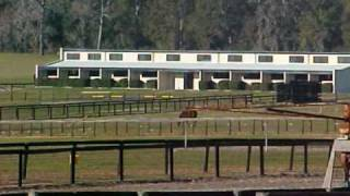 Ocala Premier Horse Farm Training Facility