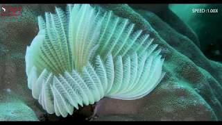 BLOOMING OF TUBE WORM