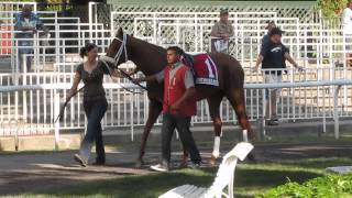 Day at Belmont Racetrack