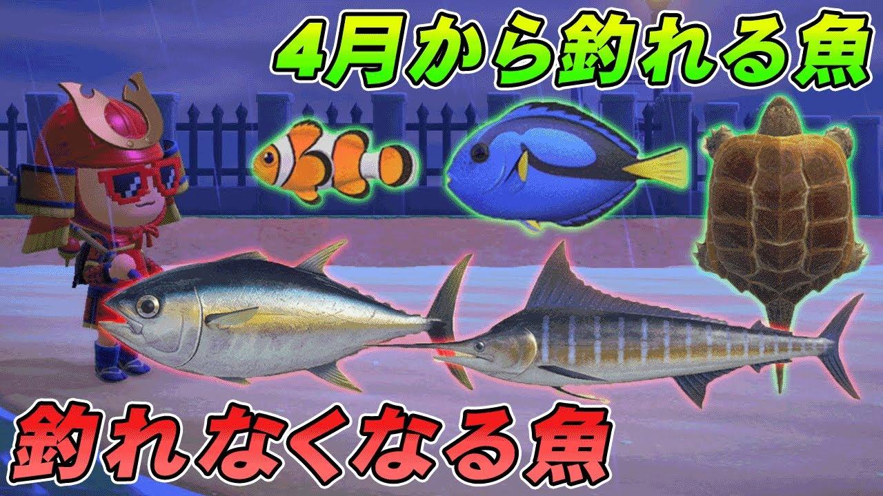 森 月 魚 四 あつ の