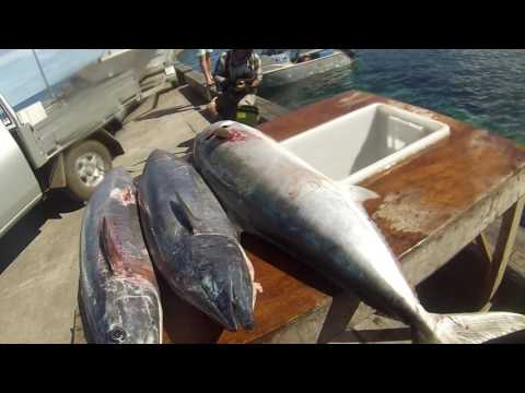 Norfolk Island Winter Wahoo