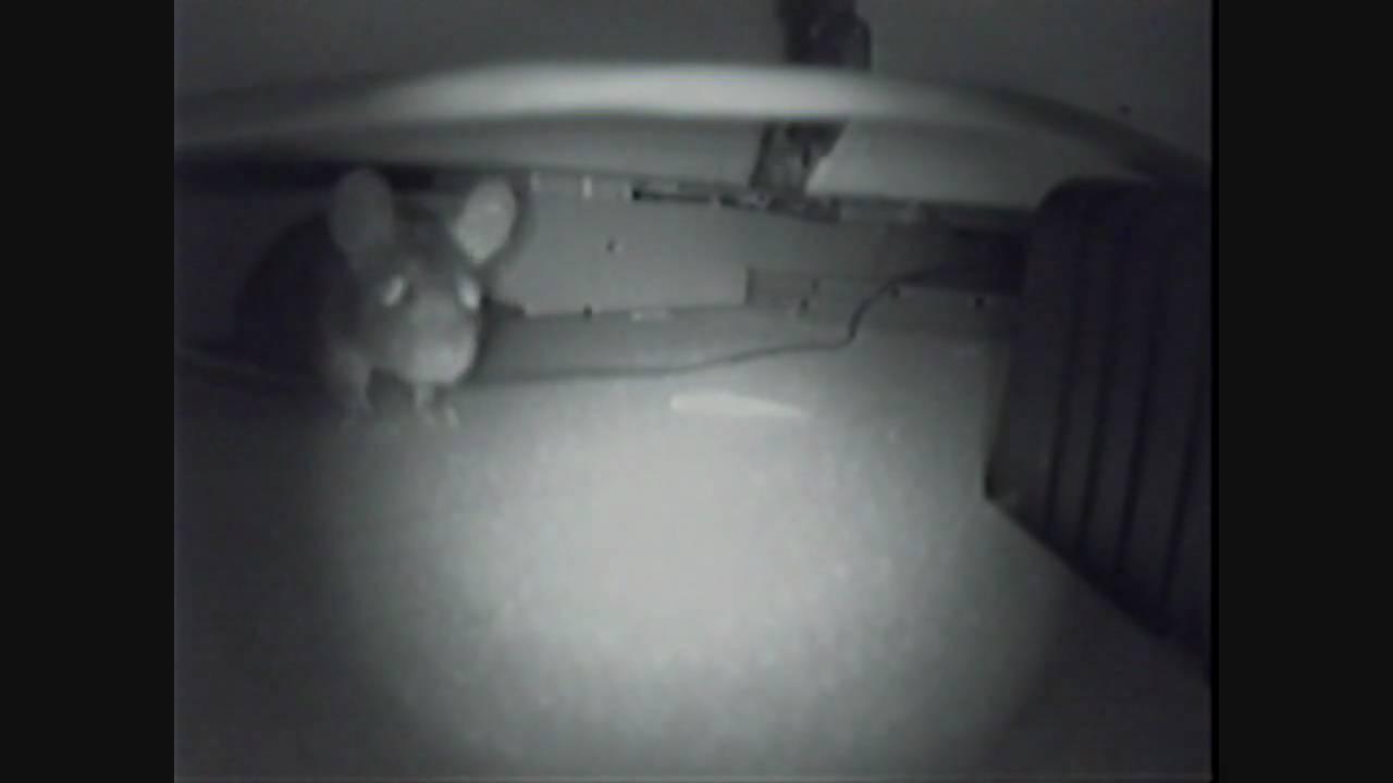Rat In The Ceiling