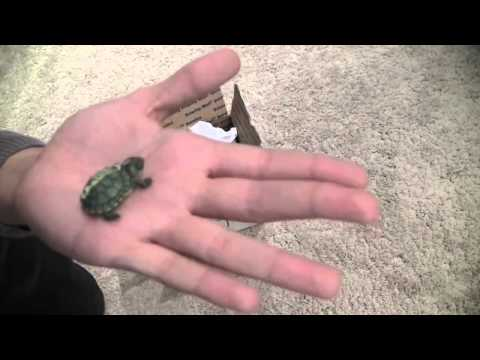Unboxing My Cute Miniature Turtle
