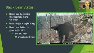 Black Bears in Missouri!