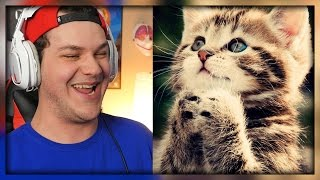 Try Not To Grin Or Aww Challenge 'Cute Animals' - Reaction