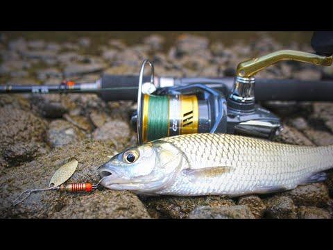 Download ОТКРИХ НЕВЕРОЯТНО МЯСТО ПЪЛНО с КЕФАЛИ! (Спининг риболов на КЕФАЛ | CHUB FISHING)