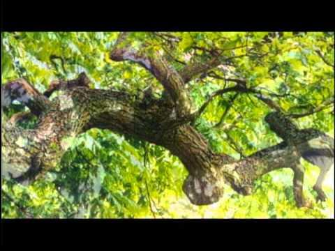 Eagan Insurance: Dueling Oak