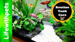 betta fish planted community tank care