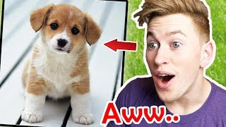 Try NOT to SAY AWW in this VIDEO!! (CUTE animals - impossible!)