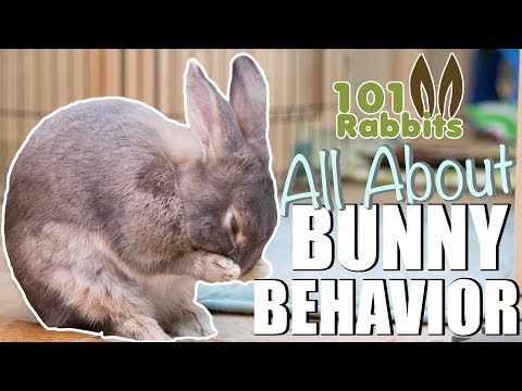 ALL ABOUT BUNNY BEHAVIOR