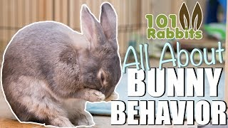 ALL ABOUT BUNNY BEHAVIOR 🐰