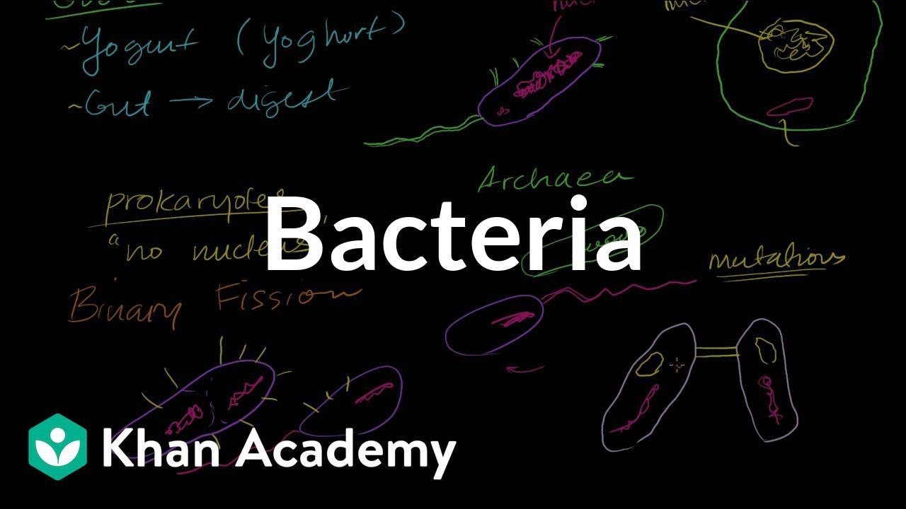 Bacteria & Virus Webquest